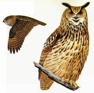 248 especies de fauna e flora galegas ameazadas de extinción
