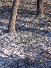 Dez preguntas básicas sobre os incendios forestais en Galicia
