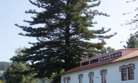 Verdegaia solicita a inclusión de varias formacións arbóreas no Catálogo de Árbores Senlleiras