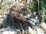 Día das aves: Roteiro pola Serra da Groba