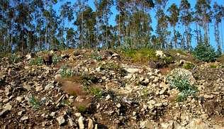 Ciberacción: Esixe a SGS rigor na certificación forestal FSC a NORFOR