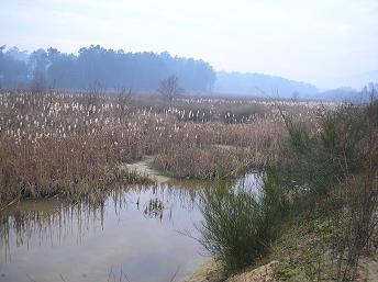 Verdegaia alerta de que o TAV afectaría tres zonas do espazo natural das Gándaras de Budiño