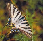 O 26 de xullo, Testing de biodiversidade nas ribeiras do Louro
