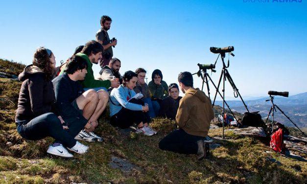 Animado Censo de Aves Rapaces en Pontevedra