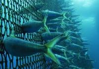 Petición pola sustentabilidade na pesca