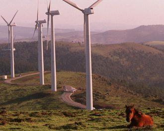O concurso eólico non é respectuoso coa natureza