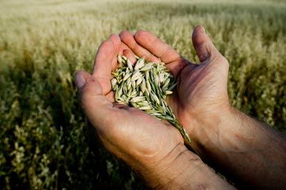 """O 8 de outubro ten lugar en Redondela o """"III Encontro da rede galega de sementes"""""""