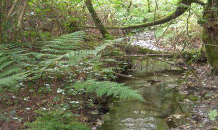 1ª Andaina polo río Baa