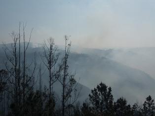 A perda das Fragas do Eume, consecuencia dunha nefasta política forestal