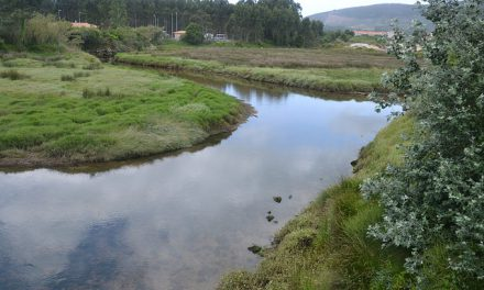 Verdegaia congratúlase de que se aborde a rexeneración ambiental das marismas da Xunqueira do Areal na Pobra do Caramiñal