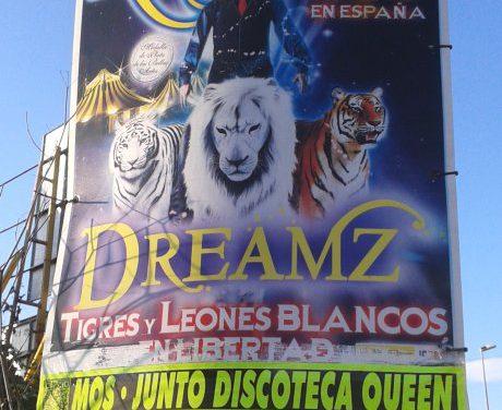 Un circo instalado en Mos mantén leóns a 2ºC