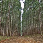Iniciativa Lexislativa Popular de loita contra o Cambio Climático, para a mellora do bosque autóctono e a recuperación do medio rural