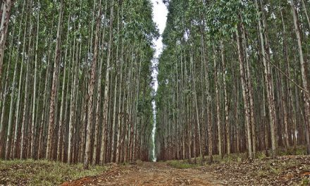 Carta aberta á FAO sobre a definición de bosque