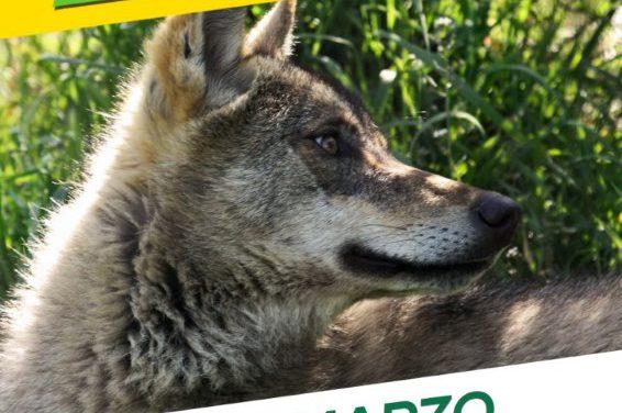 Lobo vivo – Lobo Protexido. Manifestación polo fin da matanza de lobos ibéricos