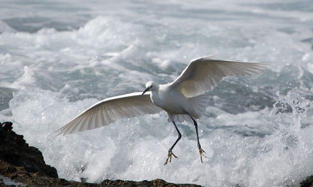 A Asociación Fontaíña, o Colectivo Matogueira, o Grupo de Anelamento Anduriña e Verdegaia solicitan ó Concello de Vigo que a praia da Calzoa non se convirta en praia canina polos seus valores ornitolóxicos