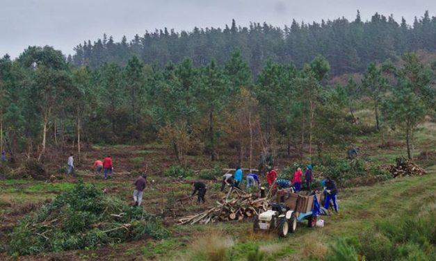 15-F Plantación de frondosas en Froxán.