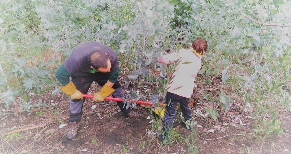En marzo… plantamos en Coruxo o 1 e desacaciamos no Hío o 7!