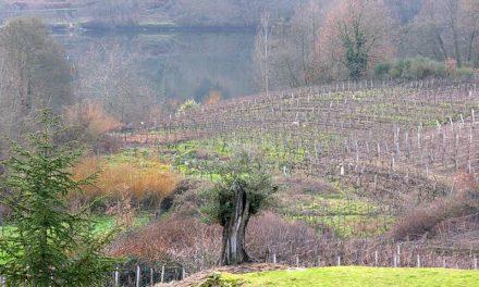 Desde a FEG alertamos sobre a proposición de Lei da Recuperación da Terra Agraria
