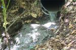 Verdegaia cuestiona a pureza do río Lérez, orgullo do Concello de Pontevedra