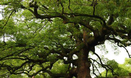 Un ano máis, pouco que celebrar o día forestal mundial