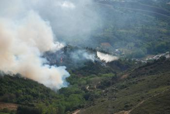 VERDEGAIA, SLG , AGA e Plataforma para a Defensa das Fragas do Eume denuncian a actual política forestal e fan un chamamento á mobilización para combater a praga dos lumes.