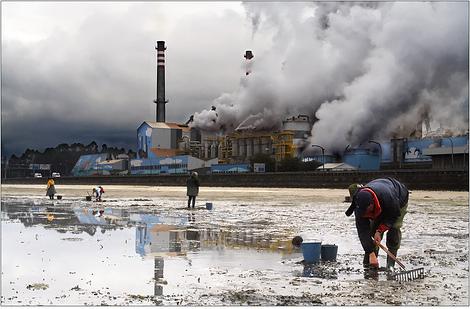 ENCE: perda dos sectores produtivos tradicionais