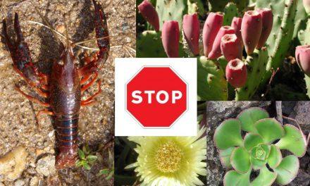 O Grupo Socialista propón a revisión do catálogo das especies invasoras