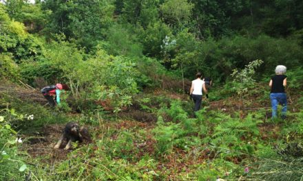 Froxán Roga o 3 de Xullo: Recuperación do Bosque autóctono